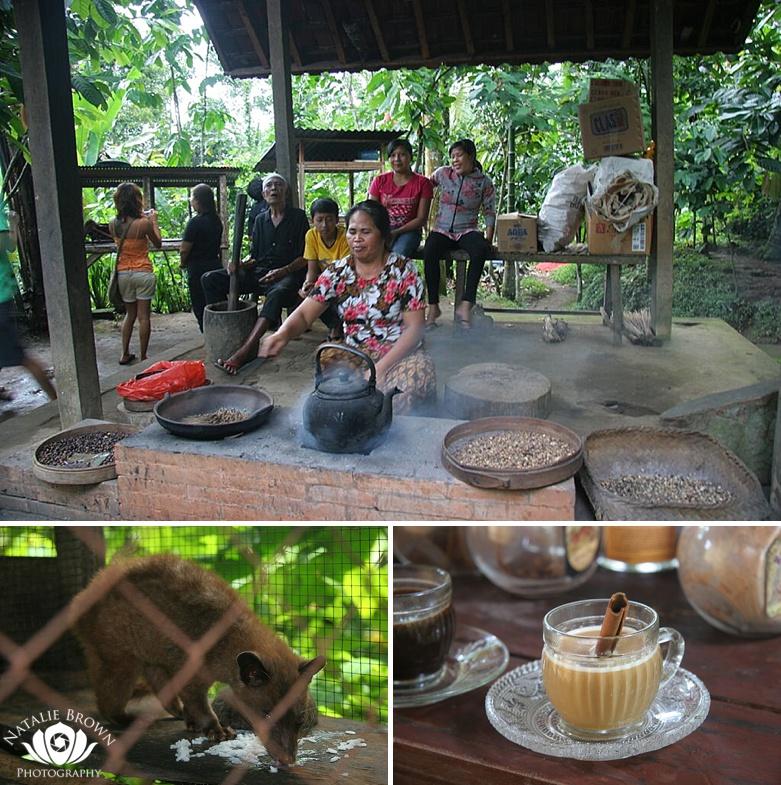 luwak coffee farms bali